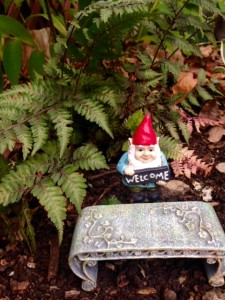 Miniature gnome under Japanese painted fern
